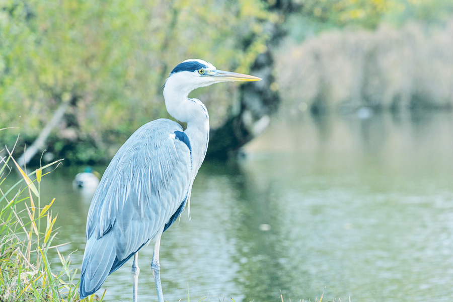 photo of egret in wetland